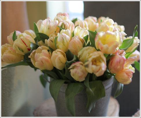 Libretto-tulips