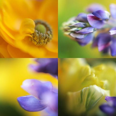 Yellow-blue-4