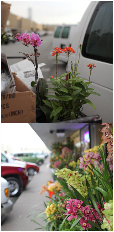 Flower-market-parking-lot
